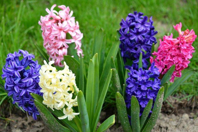 mnogoletnie-cvety-dlya-dachi-foto-612-25773.jpg