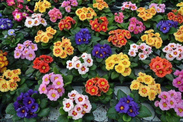 mnogoletnie-cvety-dlya-dachi-foto-612-25787.jpg