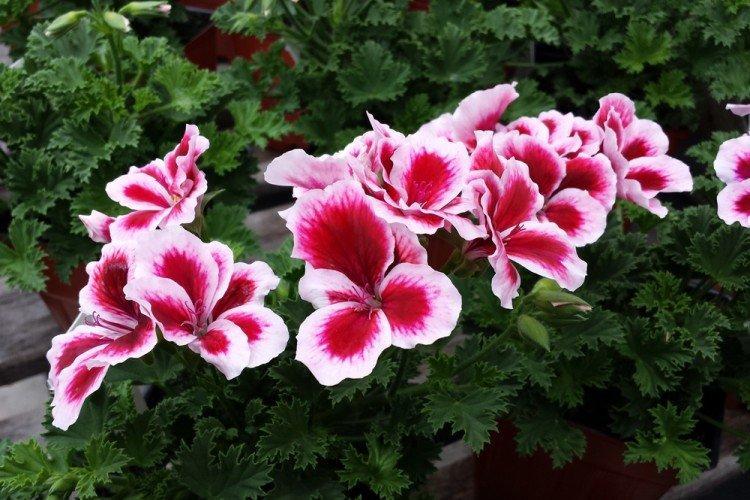 mnogoletnie-cvety-dlya-dachi-foto-612-25789.jpg