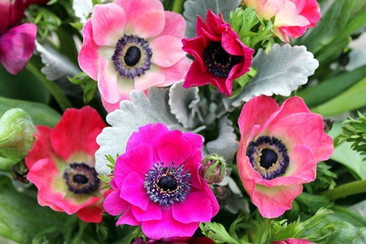 mnogoletnie-cvety-dlya-dachi-foto-612-25793.jpg