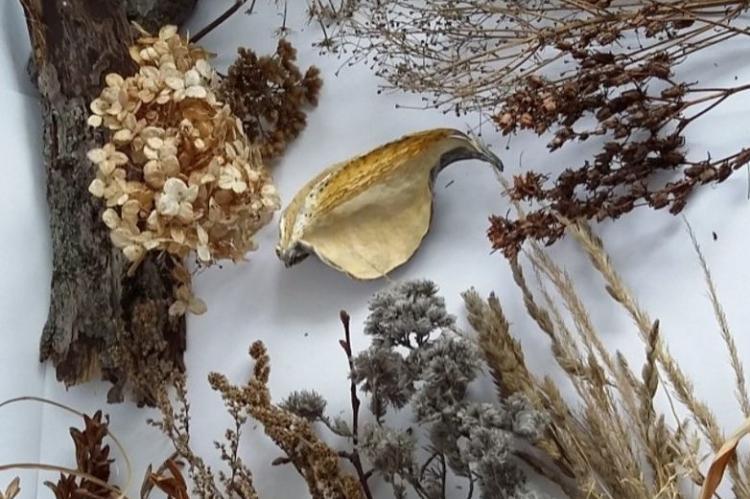 Панно из сухоцвета - Рукоделие для дома