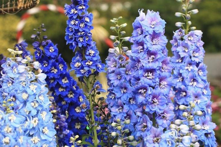 sadovye-cvety-kotorye-cvetut-vse-leto-foto-653-27198.jpg
