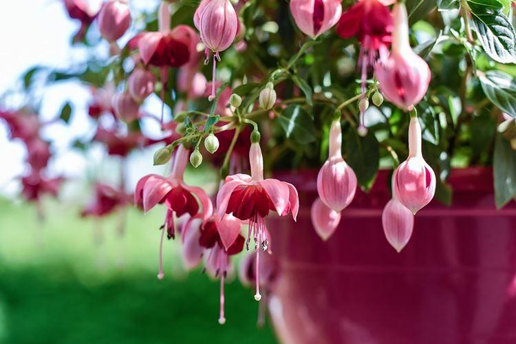 Самые красивые цветы в мире - 30 фото с названиями (каталог)
