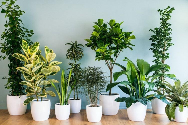 Самые неприхотливые комнатные растения: фото и названия (каталог)