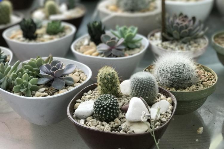 Кактусы - Виды суккулентов