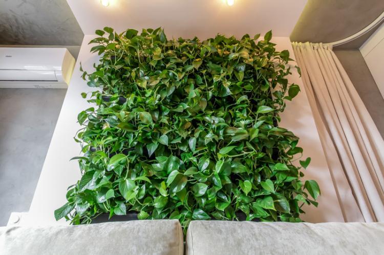 Общая характеристика - Вьющиеся комнатные растения