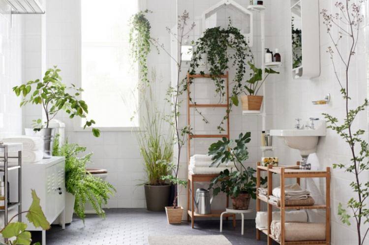 Температура - Уход за вьющимися комнатными растениями