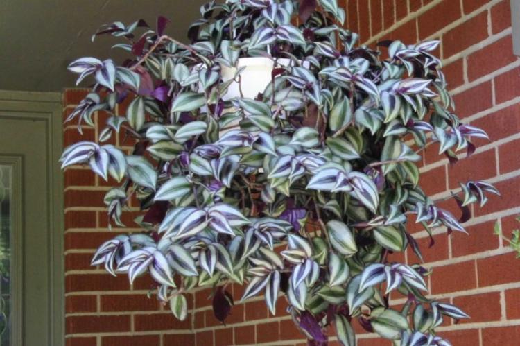 Освещение - Уход за вьющимися комнатными растениями