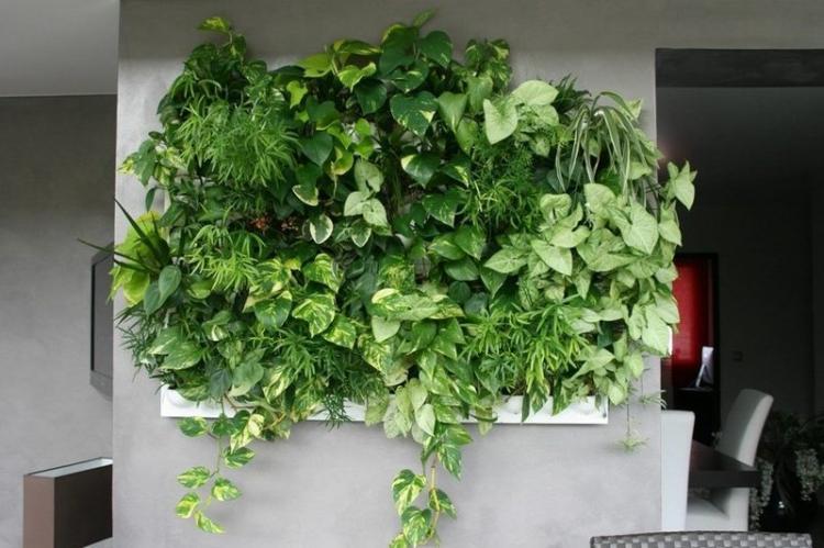 Удобрения и подкормка - Уход за вьющимися комнатными растениями