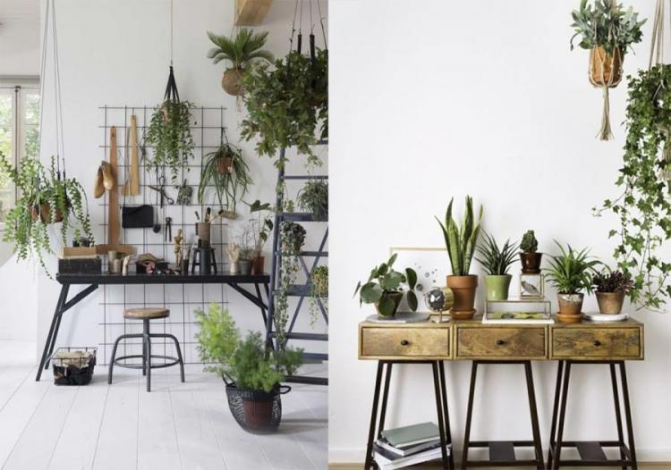 Посадка и размножение - Вьющиеся комнатные растения
