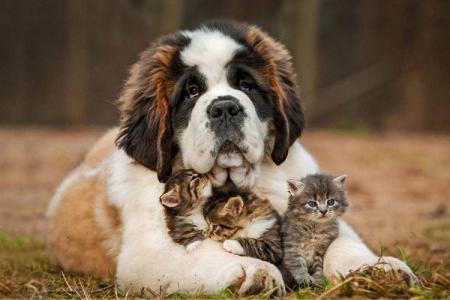 Большие породы собак: названия и фото (каталог)
