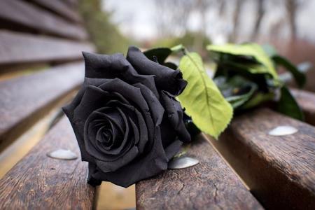 Черные цветы: 25 растений с темными цветками и листьями