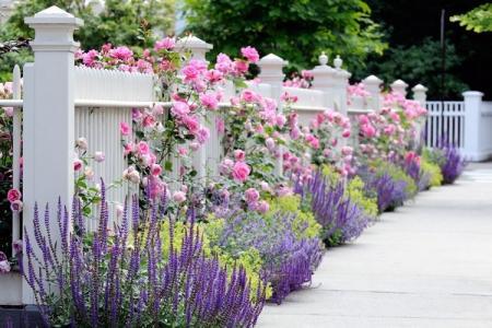 Что посадить вдоль забора: самые лучшие растения