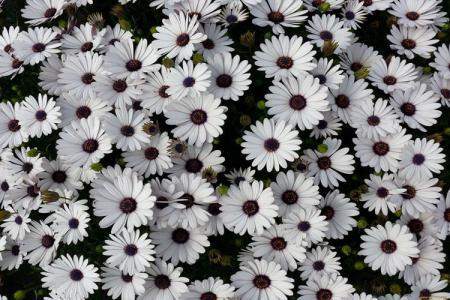 Цветы, похожие на ромашки: названия и фото (каталог)