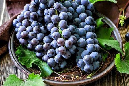 Сорта винограда без косточек: фото, названия и описания (каталог)