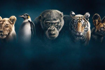 20 лучших документальных фильмов последних лет