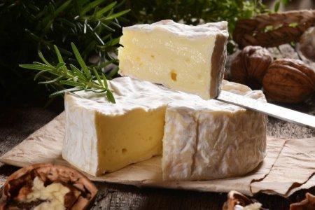 Сорта и виды мягких сыров: названия, фото и описания