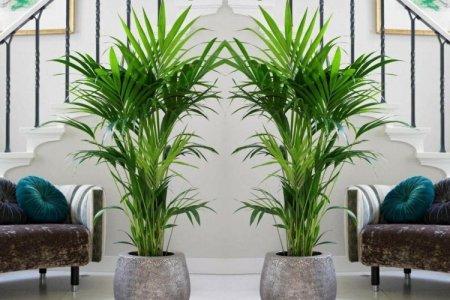 Комнатные пальмы: фото и названия (каталог)