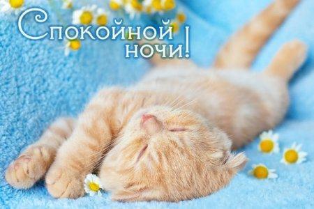 Открытки и картинки «Спокойной ночи!»
