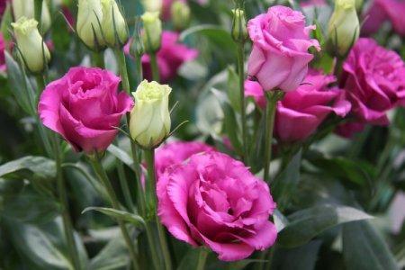 Самые красивые садовые цветы: фото и названия (каталог)