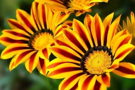 Садовые цветы: фото, названия и описания (каталог)