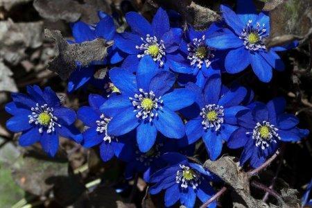 Весенние первоцветы: названия, фото и описания (каталог)