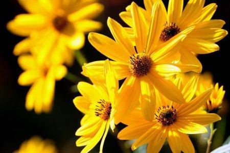 Желтые цветы: названия, фото и описания (каталог)