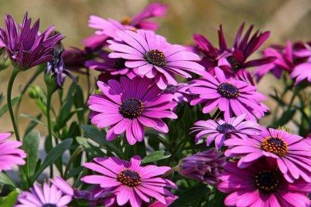 Однолетние цветы для клумбы или дачи: фото с названиями (каталог)