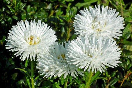 Белые цветы: названия, фото и описания (каталог)