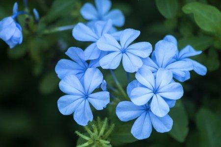 Голубые цветы: названия, фото и описания (каталог)