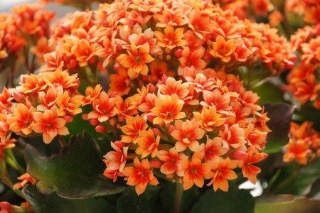 Оранжевые цветы: названия, фото и описания (каталог)