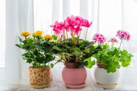 Какие цветы нельзя держать дома: фото и названия