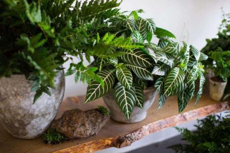Комнатные растения: фото и названия (каталог)