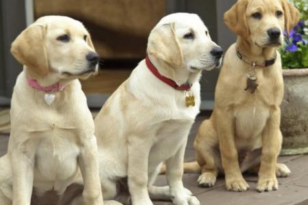 20 лучших фильмов про собак