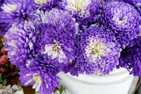Лучшие сорта хризантем: фото, названия и описания (каталог)