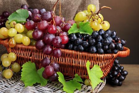 Лучшие сорта винограда: фото, названия и описания (каталог)