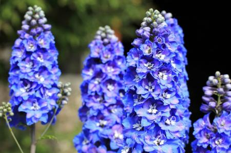 Луговые и полевые цветы: названия и фото (каталог)