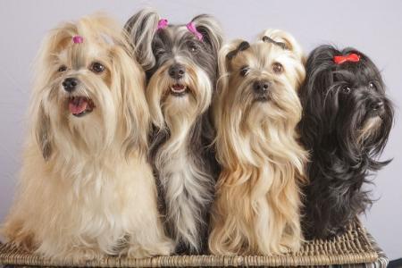 Маленькие породы собак для квартиры: названия и фото
