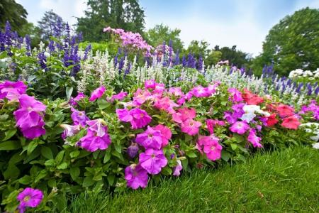 Многолетние цветы для дачи: фото с названиями (каталог)