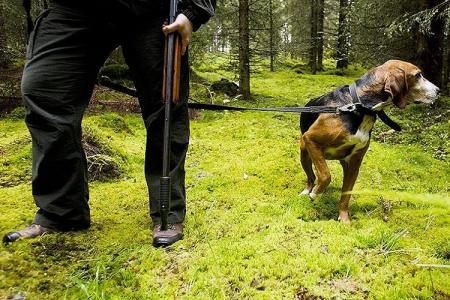 Охотничьи породы собак: 15 фото с названиями