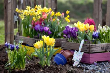 Садовые цветы, которые цветут все лето: фото и названия