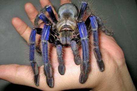 Топ-10 самых больших пауков в мире
