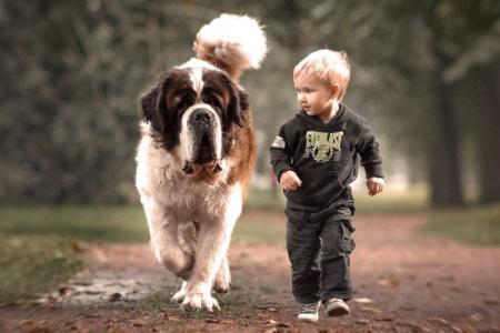 Топ-20 самых больших собак в мире