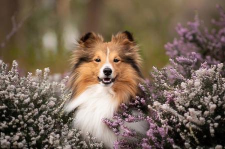 Самые красивые породы собак: названия и фото (каталог)