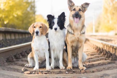 Самые умные породы собак: названия и фото (каталог)