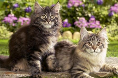 Сколько живут кошки и как можно продлить их жизнь