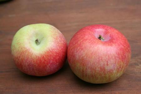 Яблоня Конфетное: описание сорта, уход и посадка